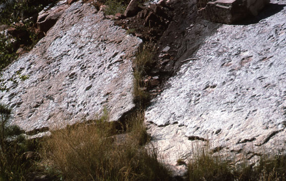 Two slabs of rock are home to Dinosaur tracks in the Zion National Park.
