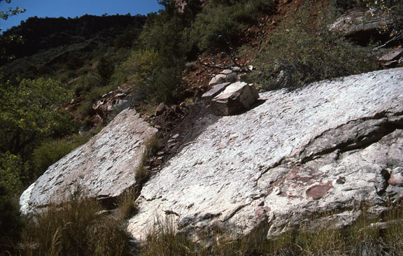 Two slabs of rock are home to Dinosaur tracks in the Zion National Park. This photo captures more of the surrounding wilderness area that is marked by shrubs, trees, and tall grass.