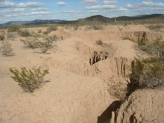 A backpacker walks in a deep gully that indicates extreme erosion. It's unclear what caused this, as it's not seen on other parts of the refuge. In some parts of this gully the walls were 10 to 12 feet high. Taken inside the Cabeza Prieta National Wildlife Refuge.
