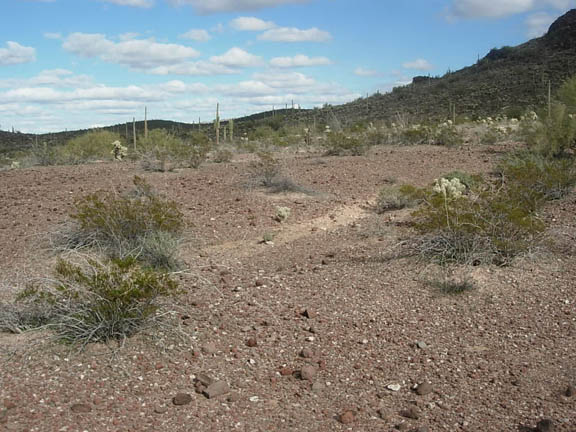 The Cabeza Prieta National Wildlife Refuge, dotted with cacti and shrubs on a sunny day.