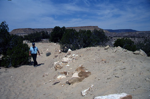 Seismosaurus spoil pile. Spoil piles are excavated materials consisting of topsoil or subsoils that have been removed andtemporarily stored.