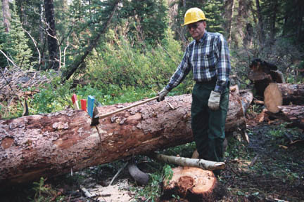 A man in a hard hat, standing next to a large felled tree.