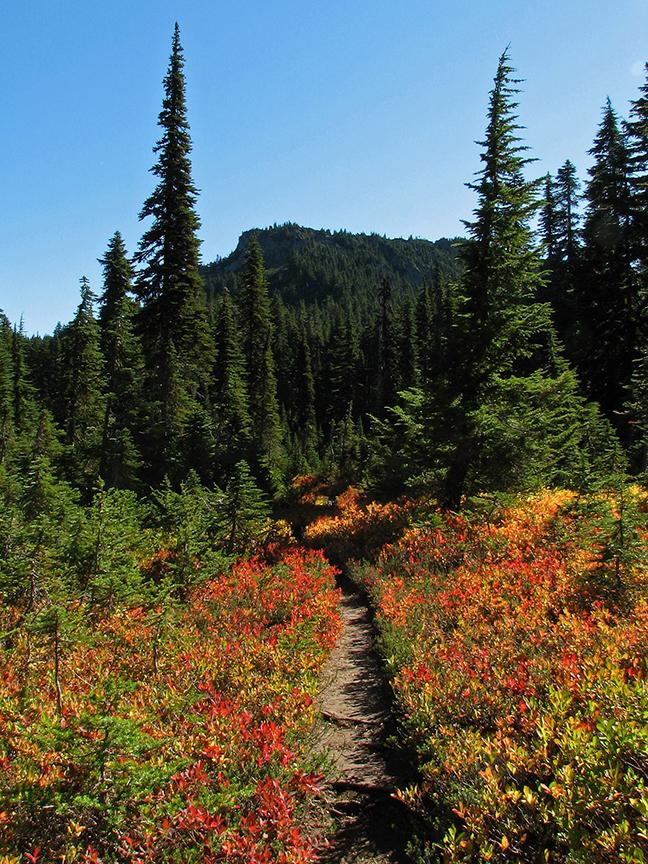 Fall colored shrubs along a trail