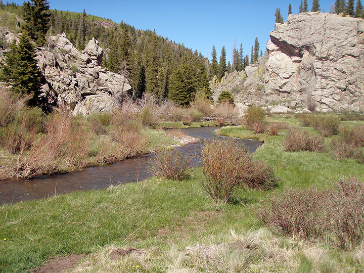 Stream and meadow