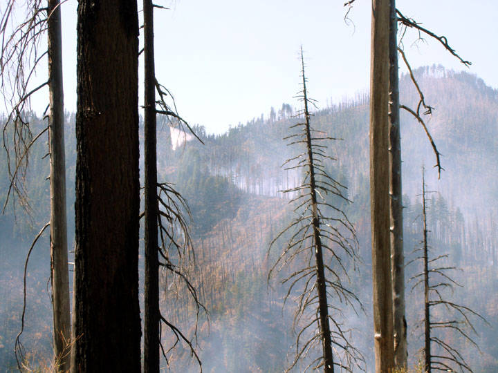 A view through the naked remains of charred trees to the smokey hills and burned forest on the other side of a valley.