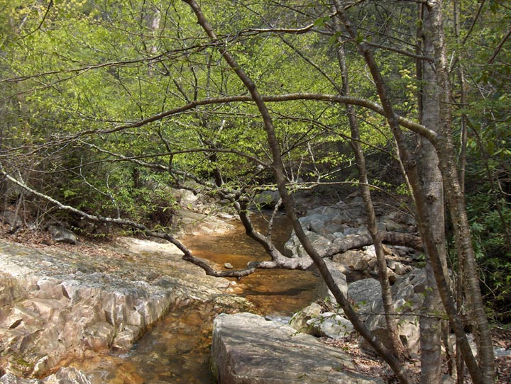 A small stream flowing over bedrock, surrounded by dense green forest.