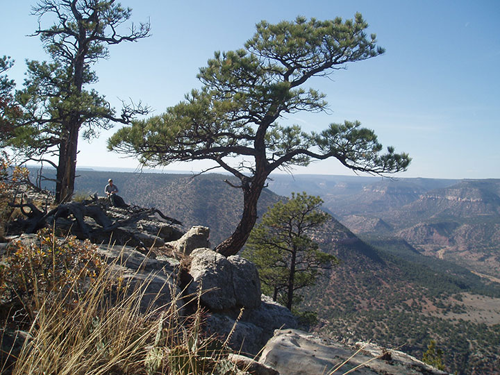 Two trees cling to the edge of the canyon rim.
