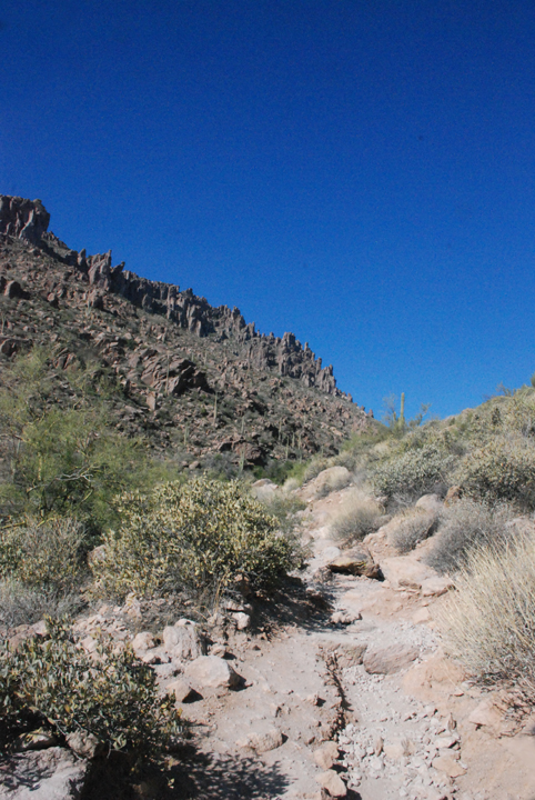 Desert plants dot the rocky landscape that juts into mountains, contrasting with the deep, dark blue of the sky.