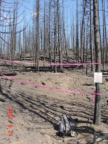 A ghostly burned forest stand with pink tape strung through the trees indicating trail closure.