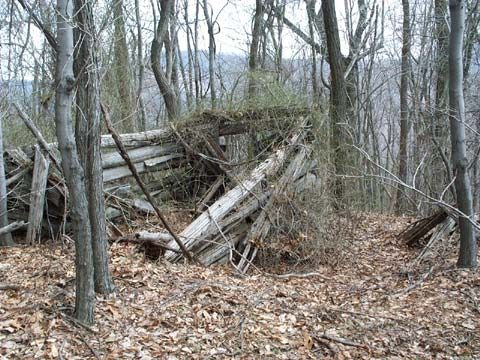 A close-up of the dilapidated remains of an old log cabin, now surrounded by dense woodland.