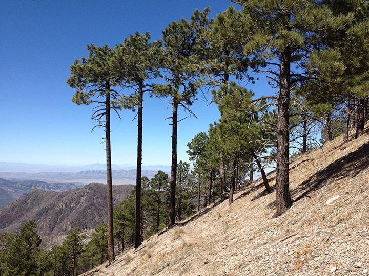 Trees on a steep slope