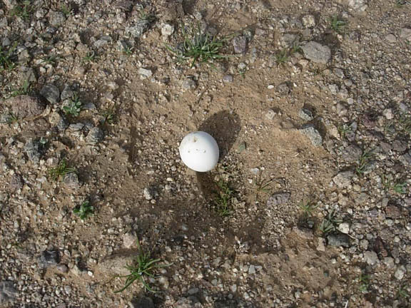 A lone egg on the exposed soil. A night Hawk egg? These birds lay their eggs on exposed soil. Taken inside the eastern region of the Cabeza Prieta National Wildlife Refuge.