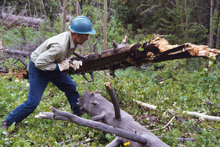 A man in a hard hat, using a large hand saw to cut a felled tree into sections.