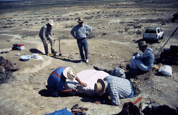 Researchers work on a dinosaur excavation in a desert area.