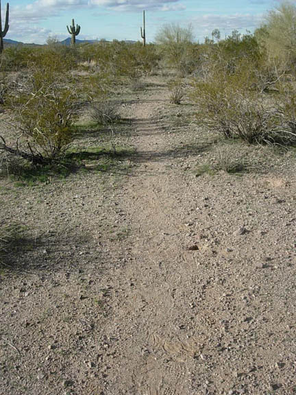 A footpath used heavily by illegal immigrants. Taken inside the eastern region of the Cabeza Prieta National Wildlife Refuge.