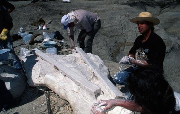 Paleontologists work on a fossil cast.