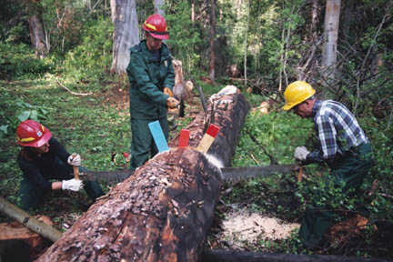 Three people wearing hard hats, using a large hand saw and wedges, to cut a felled tree into sections.