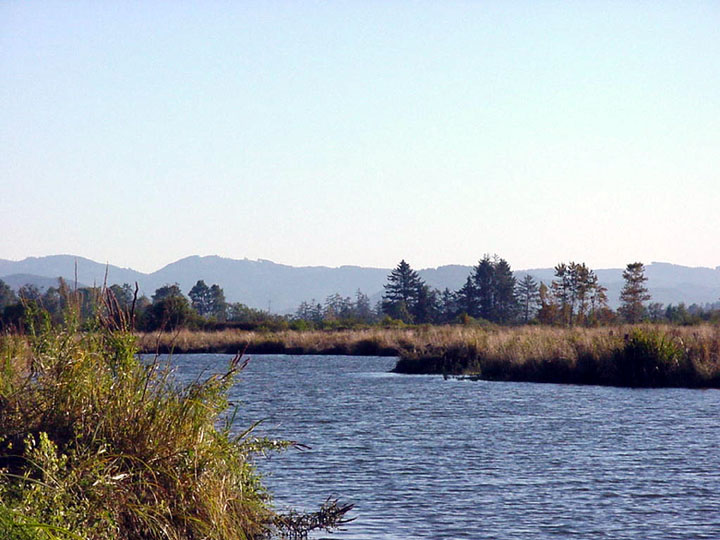 A small river channel flowing through a grassy marshland. Trees break the horizon, against the shape of low mountains in the distance.