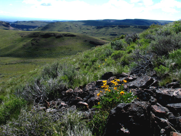 A cluster of small yellow flowers sits atop a rocky slope covered with sagebrush and green grasses that extend over the landscape.