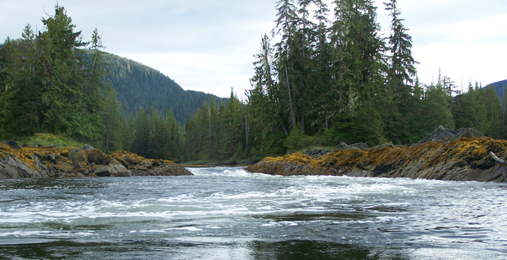 A rippling river with moss covered rocks along the bank flows out of forest covered hills.
