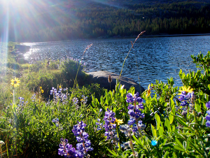 Rays of sun reflect off a deep blue lake with purple and yellow flowers along the shore.