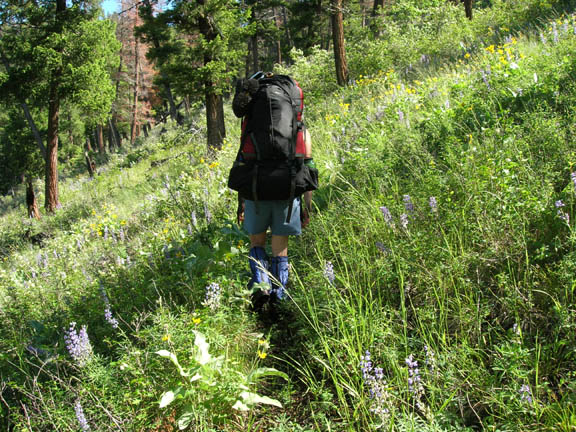 A backpacker treks along a lush, green hill that's also dotted with pine trees and wildflowers. This photo was taken during University of Montana summer 2007 volunteer weed inventory study.
