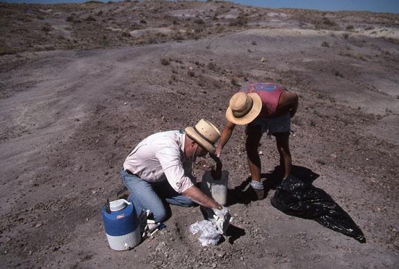 Two paleontologists do minimum impact paleological work - site near way.