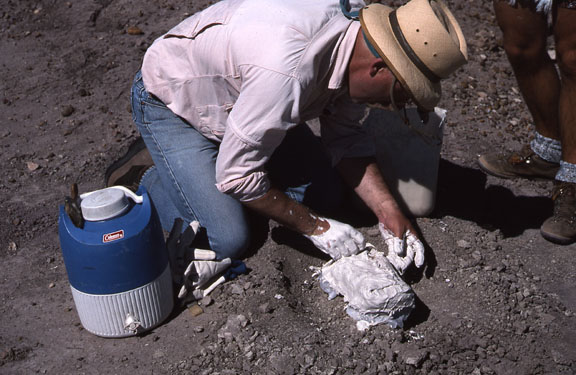 A paleontologist does minimum impact paleological work - final plaster.