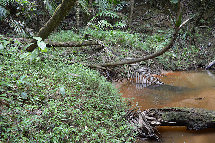 A muddy river flows amid jungle vegetation.