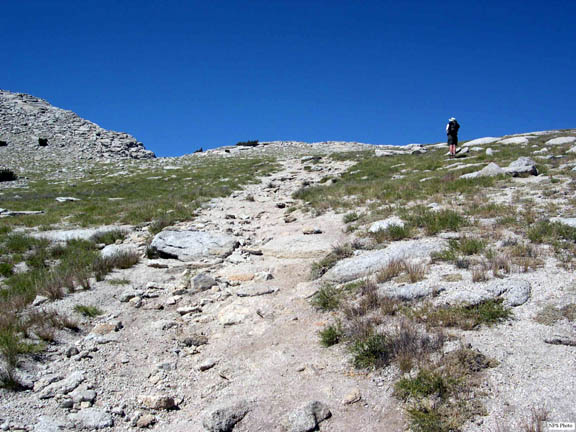 Another shot of an informal trail developing on the shoulder of Mt. Hoffman.