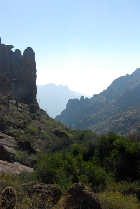 Shrubs and cacti line the bottom of a canyon with large flat rock faces on either side.