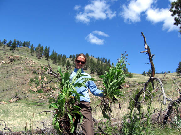 A volunteer holds up a weed or plant and poses for this photo. This photo was taken during University of Montana summer 2007 volunteer weed inventory study.