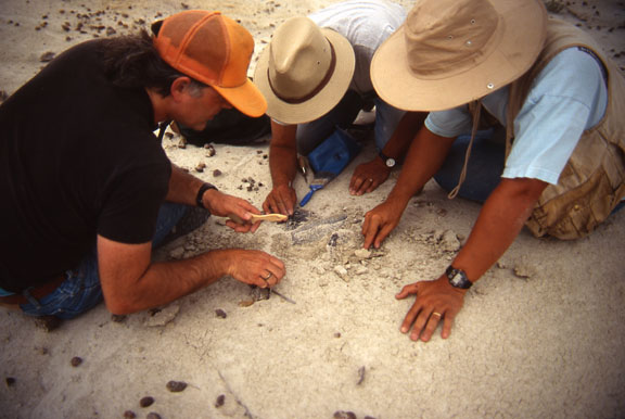 Three paleontologists excavate small artifacts.