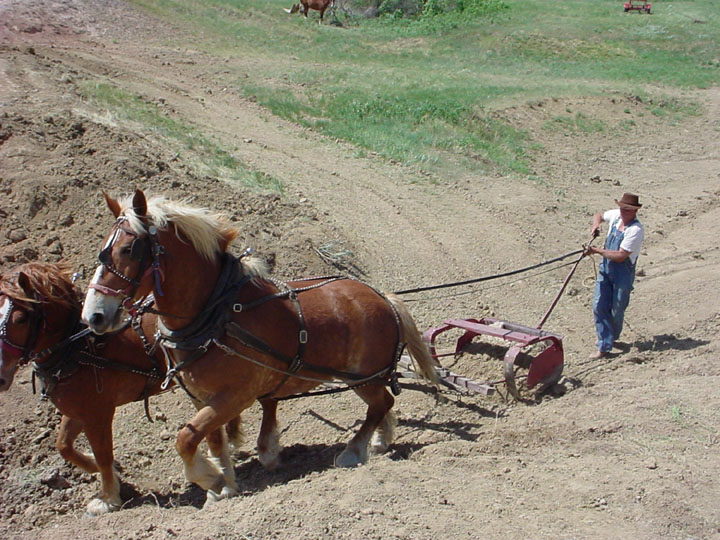 A man working a Fresno scraper pulled by two large horses.