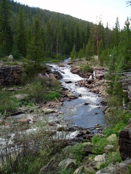 A series of rapids along a rushing stream, winding its way through open forest.