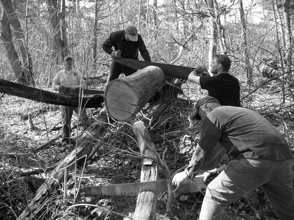 A black and white image of several men working to clear fallen trees with hand saws.