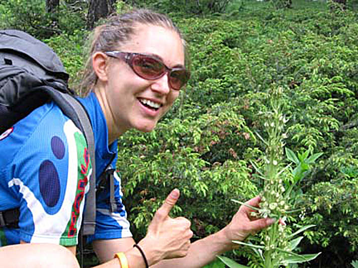 A backpacker/volunteer gives a thumbs up while posing next to a weed. This photo was taken during University of Montana summer 2007 volunteer weed inventory study.