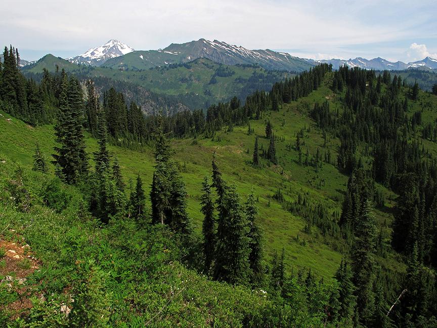 Trees line a green ridge