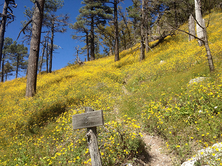 A signed trail leads through bright yellow flowers