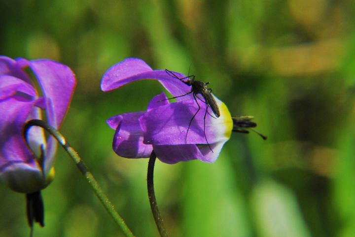 wilderness  wilderness library image  alpine shooting, Beautiful flower