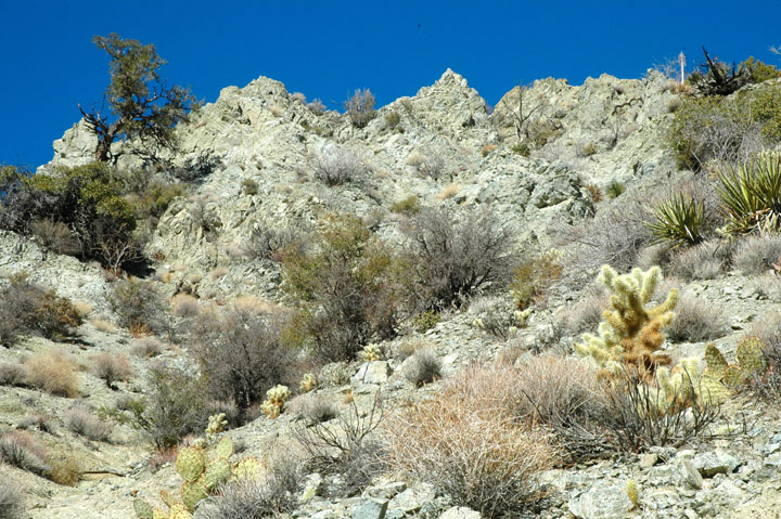 Looking up a rock formation covered in desert vegetation and cactus.