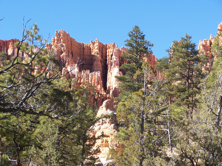 Tall trees are the foreground for a massive red cliff face, filled with interesting lines and crags.