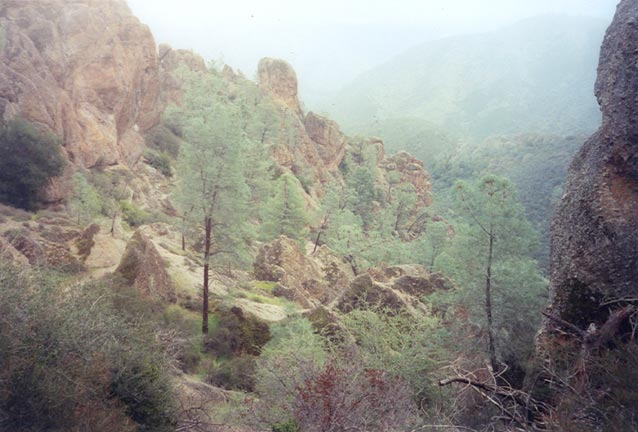 A small bowl with low brush and a handful of tall evergreen trees, surrounded by high rock pinnacles.