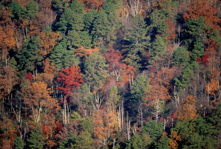 An autumn scene of woodland trees in deep red, orange, yellow, and green.