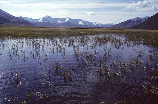 A large lake thick with water plants straddles the valley between two Alaskan mountain ranges.