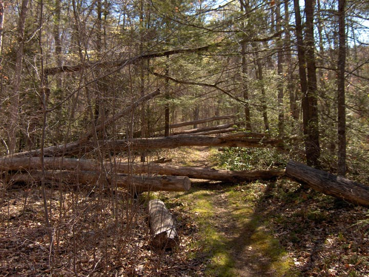 A large windfall tree lies across a narrow dirt path through the forest.