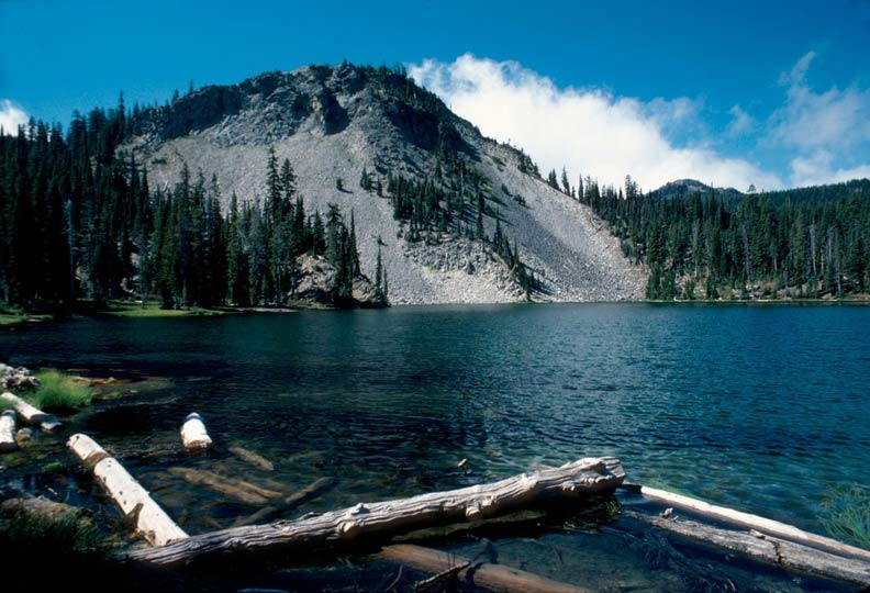 Driftwood in the foreground, along the edge of a crystalline alpine lake, surrounded by dense forest and a rocky knoll on the far shore.