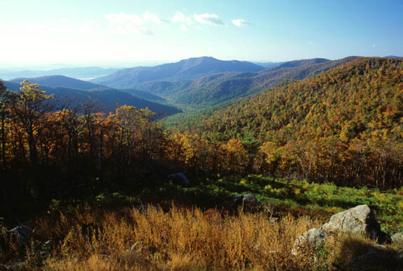 A gorgeous shot of the autumn transition in the Old Rag Mountain area on a fairly sunny day.