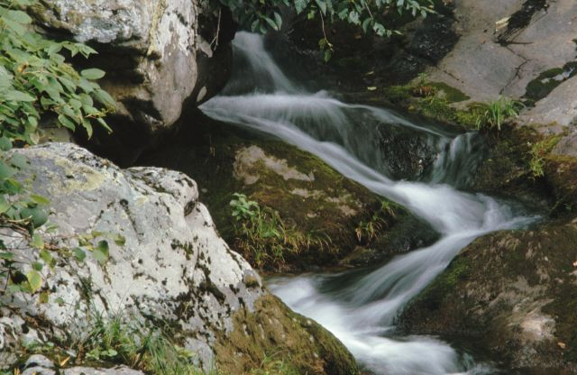 A close-up of a small silky stream, flowing through moss-covered boulders.