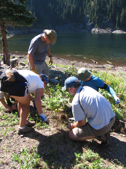 Volunteers invesigate the area next to a river. Taken during University of Montana summer 2007 volunteer weed inventory study.